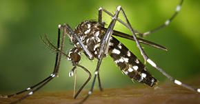 簡単蚊取り器がフィリピンで大活躍