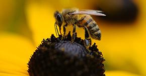 ツマアカスズメバチの防除対策