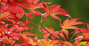 虫の音色で季節を感じるのは日本だけ?