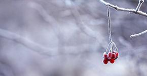 冬の訪れを告げるフワフワな虫