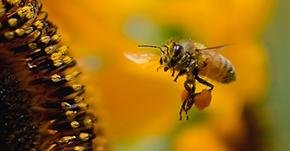 新種のハチ発見!