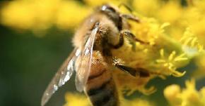 あまり知られていない蜂の仕事