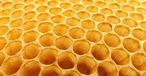 なぜ蜂の巣は六角形なの?
